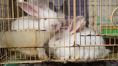The small white rabbit, was shut in a cage Stock Footage