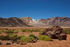 Cushion Plants in the Atacama Stock Photos