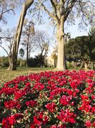 flowery corner ciutadella park. - stock photo