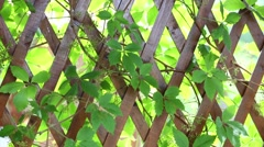 Wooden fence with interlacing branches and leaves on wind Stock Footage