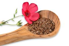 Red linum blossom, flaxseed - stock photo