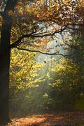 sun light lit glade in autumn forest - stock photo