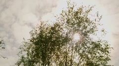 Leaves in the wind Stock Footage