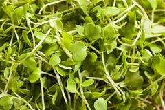 Raw green arugula microgreens Stock Photos
