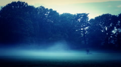fog mystery forest in the park mystic woods horror creepy scene Stock Footage