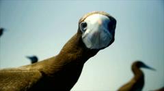 Head of gannet Stock Footage