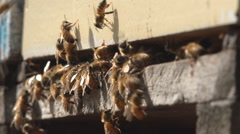 Bees enter hive low shot HD Stock Footage