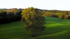 Beautiful oak tree in rural landscape, bavaria, germany Stock Footage