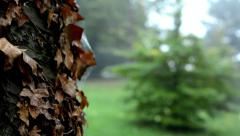 Detail of a tree trunk with dry leaves - forest (trees) - morning mist Stock Footage