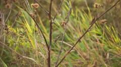 Bur in autumn sun, pan movement Stock Footage
