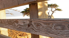 Motion Controlled Dolly Time Lapse of Lone Cypress in Monterey -Pan Right- Stock Footage