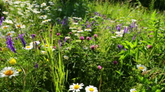 Walking through a blossoming meadow with daisies Stock Footage