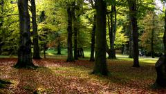 Panorama autumn park (trees) - fallen leaves - people walking in background Stock Footage
