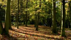 Panorama autumn park (forest-trees) - fallen leaves - sun rays (sunny) Stock Footage
