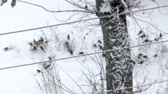 Sparrows in the snow Stock Footage