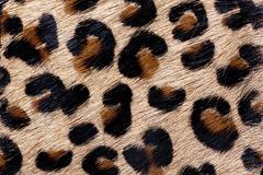 Material in animal skin pattern, a background or texture - stock photo