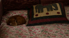 Red cat curled up on quilt Stock Footage