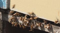 bees enter behive medium shot 4k - stock footage