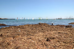 4K Motion Controlled Dolly Time Lapse of Yacht Race in Santa Barbara -Full Frame Stock Footage