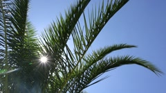 Sun rays shinning behind green palm tree  Stock Footage