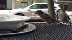 Urban sparrows eat from cafe plate Stock Footage