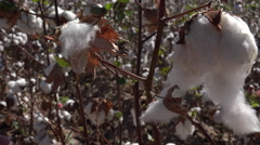 4K Hands Stretch Long Fluffy Cotton Close Up Stock Footage