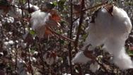 Stock Video Footage of 4K Hands Stretch Long Fluffy Cotton Close Up