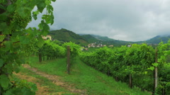 0494 Vineyard in a rainy day Stock Footage