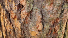 Tree bark texture Stock Footage