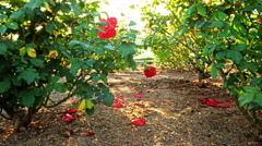 Motion Controlled Dolly Time Lapse of Mission Santa Barbara over Roses -Tilt Up- Stock Footage