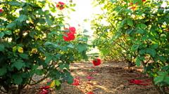 Motion Controlled Dolly Time Lapse of Mission Santa Barbara over Roses Tilt Down Stock Footage