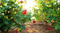 Motion Controlled Dolly Time Lapse of Mission Santa Barbara over Roses -Zoom In- Stock Footage