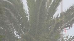 Tropical storm on the island. Typhoon. Hurricane.Bad weather. - stock footage