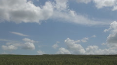 HD. Splendid background with blue sky, puffy clouds and wheat crop. Stock Footage