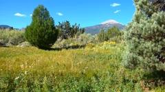 Beautiful Mountain Meadow Great Basin Stock Footage