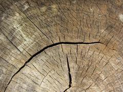 Cross section log texture Stock Photos