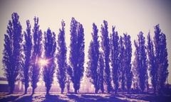 Vintage filtered picture of trees in a row. Stock Photos