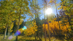 4K Aspen Forest 04 Fall Foliage in Grand Canyon North Rim USA Stock Footage