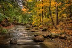 Forest stream in autumn Stock Photos