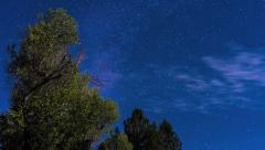 1080p Night time lapse stars moving behind moonlit tree Stock Footage