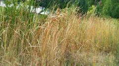 Tennessee Wetland (Marsh) Stock Footage