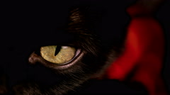Macro shot of a black cat's yellow eye. Stock Footage