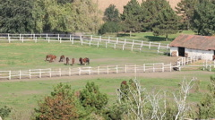 herd of horses in corral aerial view - stock footage