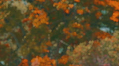 Defocused trees swaying in the wind. 4K fall themed background plate. Stock Footage