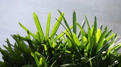 Closeup shot of indoor plant leafs Stock Footage