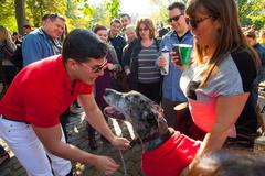 Scenes from The 24th Annual Tompkins Square Halloween Dog Parade Stock Photos