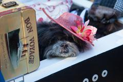 Scenes from The 24th Annual Tompkins Square Halloween Dog Parade - stock photo