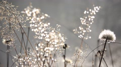 4K Frosted Dandelion Flower in Morning Dew, Magic Mystical Glade in Fog, Smoke Stock Footage