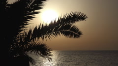 Palm Tree Silhouette in Sunset on Exotic, Tropical Island, Sunrise on Sea, Ocean Stock Footage