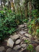 Mount Kinabalu Trail, Sabah, East Malaysia Stock Photos